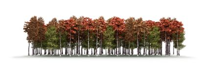 Color trees isolated on white background Forest and foliage in autumn 3d render