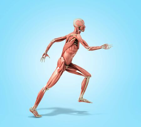 medically accurate illustration of a human muscle system run pose 3d rendered on blue gradient