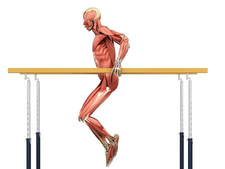 medically accurate illustration work of the human muscular system when performing exercises on a sports apparatus 3d render on white