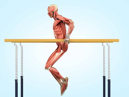 medically accurate illustration work of the human muscular system when performing exercises on a sports apparatus 3d render on blue gradient Reklamní fotografie