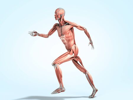 Medically accurate of a human muscle system run pose 3d rendered on blue gradient