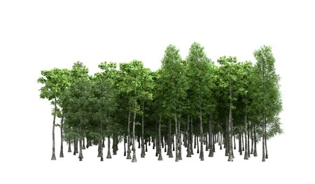 Green trees isolated on white background Forest and foliage in summer 3d render on white no shadow