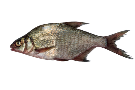 fish bream isolated on white background 免版税图像