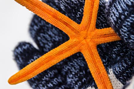 star fish: Orange starfish on the hand Stock Photo