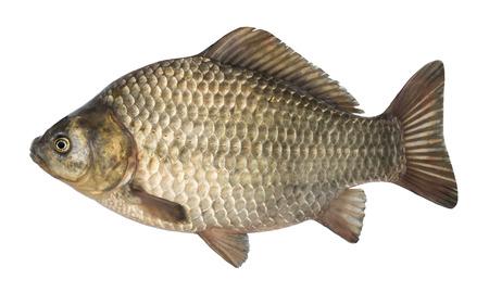 Fresh raw fish isolated on white background