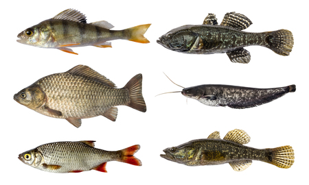 set of fish isolated on white background Stock Photo