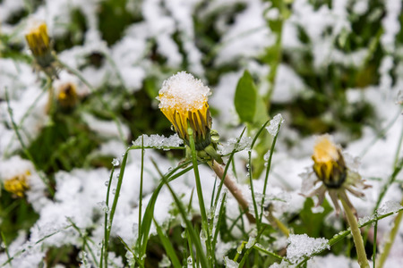 anomalous spring in Belarus, the snow fell in May 2017