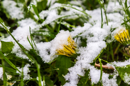 11 May 2017, Belarus, snow in spring Stock Photo