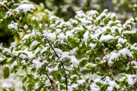 atmospheric phenomena: climate change in Belarus in spring