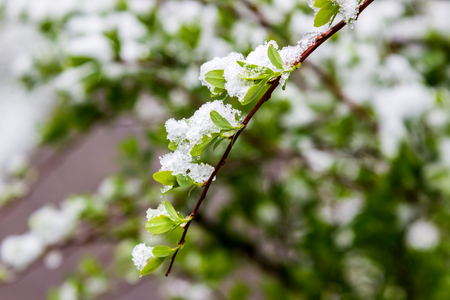 climatic: winter in spring, May 2017, Belarus Stock Photo