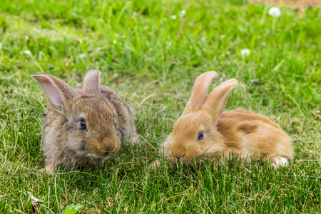 two young rabbits Stock Photo