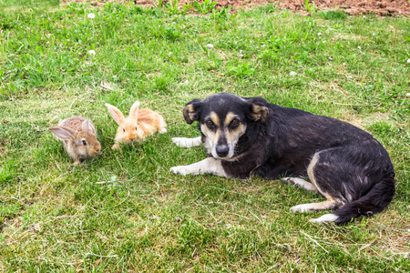 two rabbits and dog