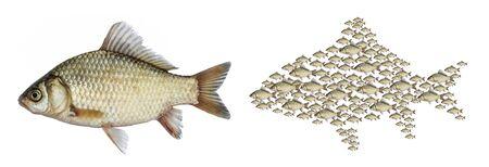 Fish isolated, set school