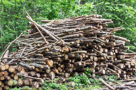 biomasa: Montón de troncos de árboles. Tala de árboles en el bosque