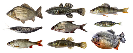 Isolated fish collection set Stock Photo