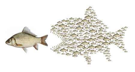 Organized school of fish. A flock of predatory fry attack fish.