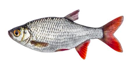 geïsoleerde vis Stockfoto
