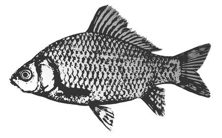 Fish crucian silhouette icon, vector illustration Illustration