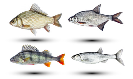 River fish isolated Stock Photo