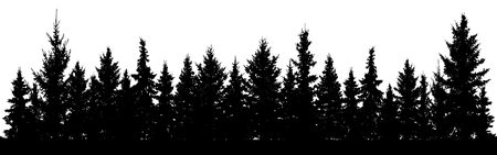 Forest of Christmas fir trees silhouette. Coniferous spruce. Park of evergreen wood. Vector on white background