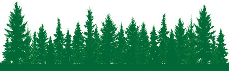 Forest of fir trees silhouette. Park alley of evergreen wood. Coniferous spruce. Vector on white background