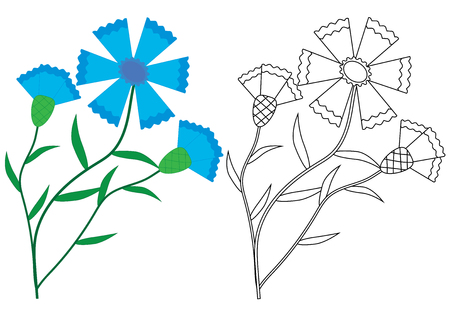 Knapweed (Cornflower) flowers. Coloring book, vector illustration