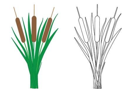 Reeds, coloring page. Vector illustration Ilustração