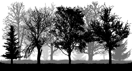 Silhouettes d'arbres et de sapins. Parc d'automne (forêt), vecteur