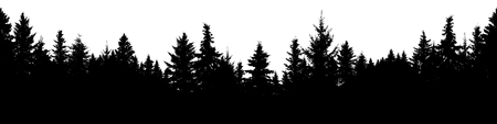Seamless silhouette of coniferous forest, vector. Evergreen Christmas Tree, spruce, fir. Isolated vector on white background
