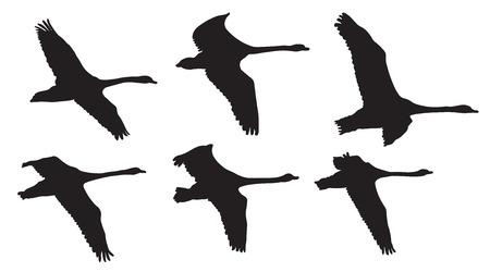 Flying swans birds in the sky, silhouette Illustration