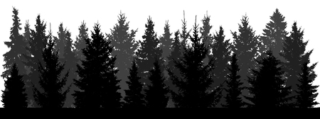 Silhouette of forest (fir trees, spruce) on white background. Vector illustration.