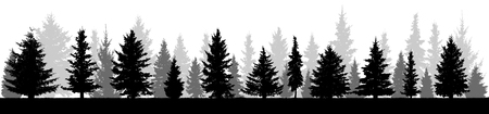 Forest fir trees silhouette. Coniferous spruce. Isolated on white background