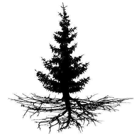 Drzewo iglaste z korzeniami, sylwetka wektor. Drewno, choinka, jodła, sosna, sosna, jodła szkocka, cedr