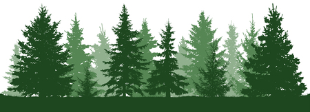 Forest fir trees silhouette. Coniferous green spruce. Christmas tree. Vector illustration on white background