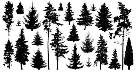 Silhouette von Kiefern. Satz Waldbäume lokalisiert auf weißem Hintergrund. Sammlung von immergrünen Nadelbäumen des Waldes. Weihnachtsbaum, Tanne, Kiefer, Kiefer, schottische Tanne, Zeder Vektorgrafik