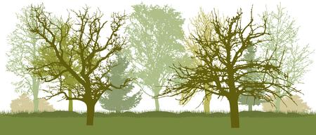Bare trees, early spring park. Vector illustration. Ilustração