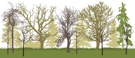 Spring park (bare trees) silhouette. Vector illustration.