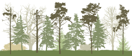 Forest silhouette in spring. Vector illustration.