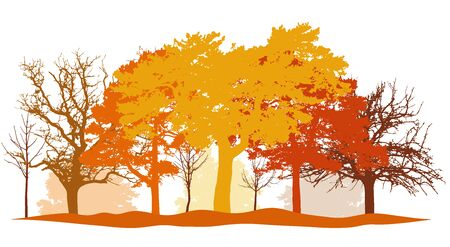 Autumn park, silhouettes of trees and bushes in autumn colors (yellow, orange, brown and others).Vector illustration Illustration