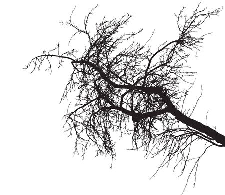 Bare tree branch silhouette on white background. Tree branch without foliage. Vector illustration