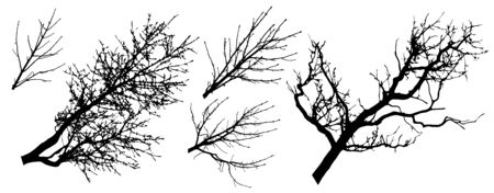 Set of tree branches silhouettes, vector illustration Illustration