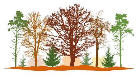 Forest in autumn, silhouettes of bare tree, firs, pine and etc. Vector illustration