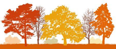 Trees in autumn silhouette. Autumn park. Vector illustration.