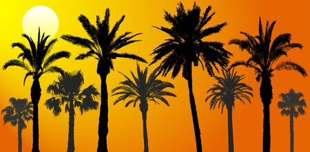 Silhouettes of palm trees at sunrise, vector illustration Stock Illustratie