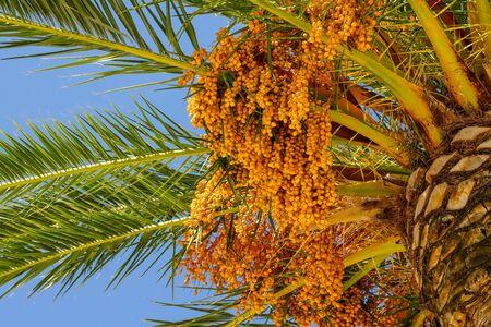 a palm tree close-up.