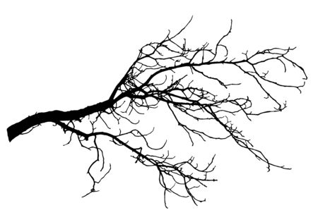 Chestnut tree branch silhouette, vector illustration. 向量圖像