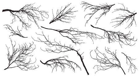 Ramas de castaños, chopos, arces, robles, etc. Conjunto de siluetas. Ilustración vectorial. Ilustración de vector