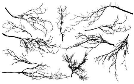 Set of silhouettes of branches of different trees (chestnut, poplar, Linden, maple, oak, etc.). Vector illustration.