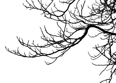 Chestnut tree, silhouette of branches. Vector illustration.