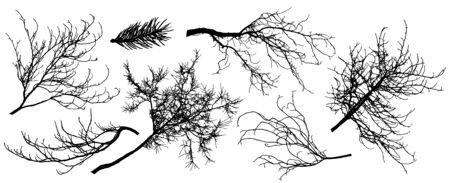 Set of silhouette of branch trees. Vector illustration. Fir tree, chestnut, oak, linden and etc. Ilustração